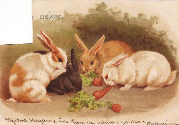 UskrsTravanj1901 // Istom gimnazijalcu na gornjogradsku gimnaziju u travnju 1901. godine stigla je čestitka Katharine i to - iz Zagreba u Zagreb