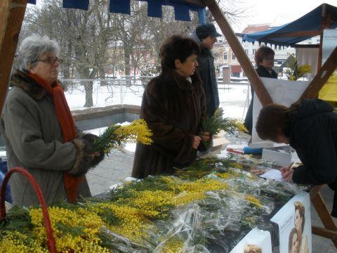 Mimozama protiv zloćudnih bolesti // Foto: Arhiva ePodravina.hr