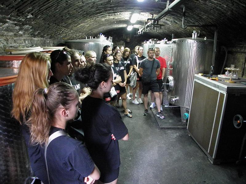 Upoznavanje s proizvodnjom vina u vinskom podrumu