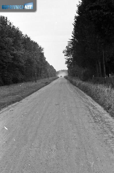 Repaška šuma snimljena 1960. godine iz pravca šumarije prema mostu na Dravi