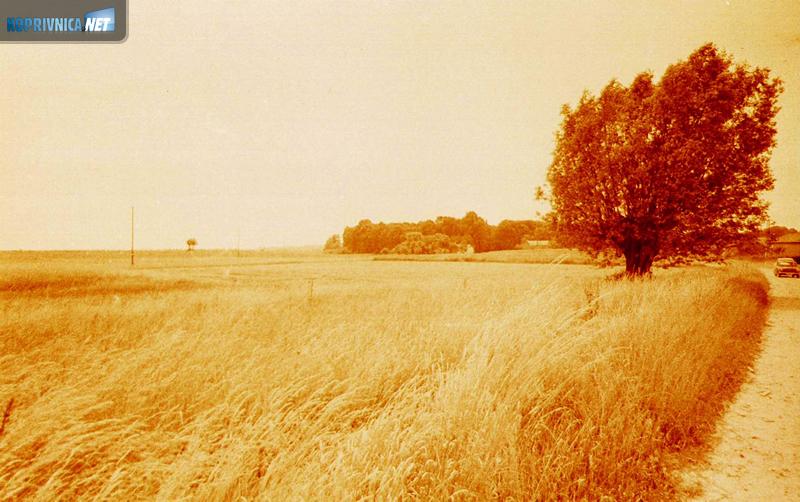 Bolji urodi na komasiranim površinama, podravska polja iz lipnja 1982. godine (kolorirani crno-bijeli fotos)
