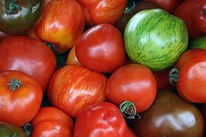 rajcica-paradajz