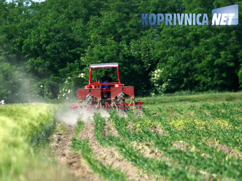 """""""Prije ili kasnije do toga da će dio poljoprivrednika prijeći na isplativije kulture od pšenice, kukuruza, ječma i uljane repice"""", smatra Tomislav Babić // Foto: Ilustracija"""