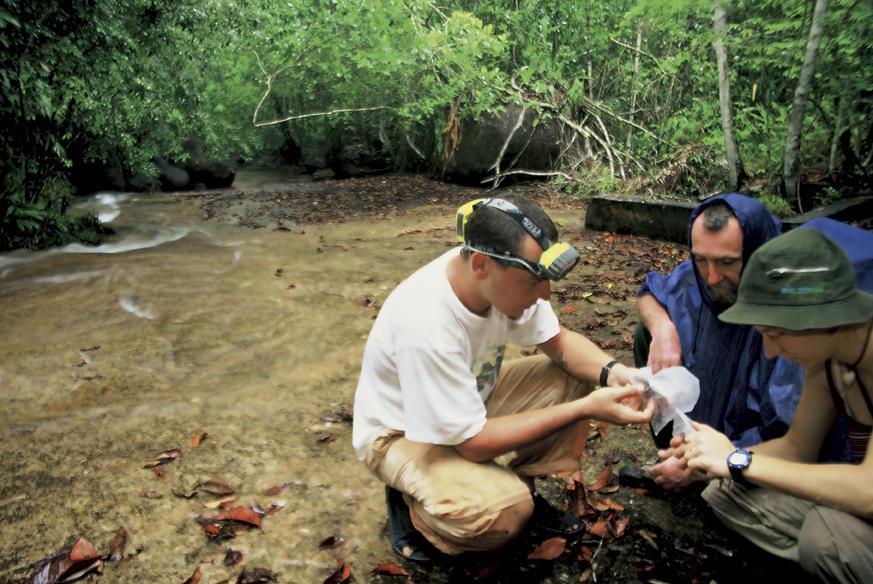 Ulovljena nova vrsta u Venezueli, kasnije opisana i objavljena u znanstvenom časopisu