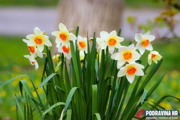 Proljetno cvijeće // Foto: Matija Gudlin