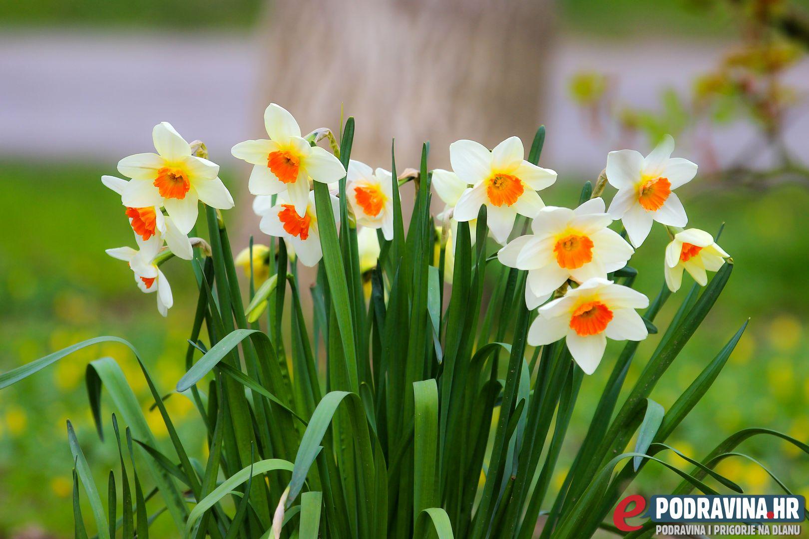 FOTO Stiglo nam je proljeće! Uživajte - ePodravina.hr