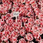 Sajam cvijeća // Foto: ludbreg.hr