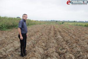 Ivan Pakasin na jednom od svojih polja krumpira // Foto: Matija Gudlin
