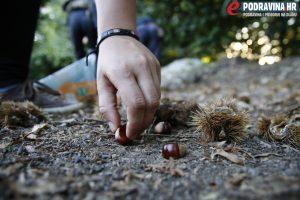 Plodovi su ove sezone nešto manji // Foto: Matija Gudlin