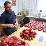 Laboratorij Podravka - sjeme paprike