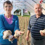Finka i Marko Lovrić, uzgajivači povrća iz Starigrada // Foto: Matija Gudlin