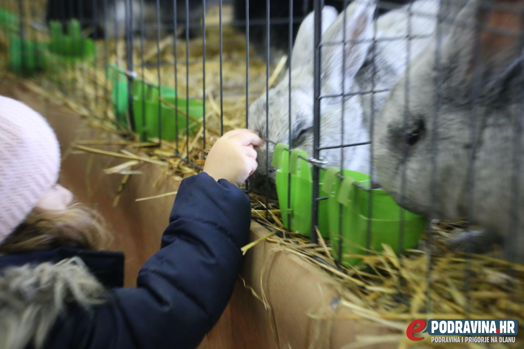 Izložba malih životinja