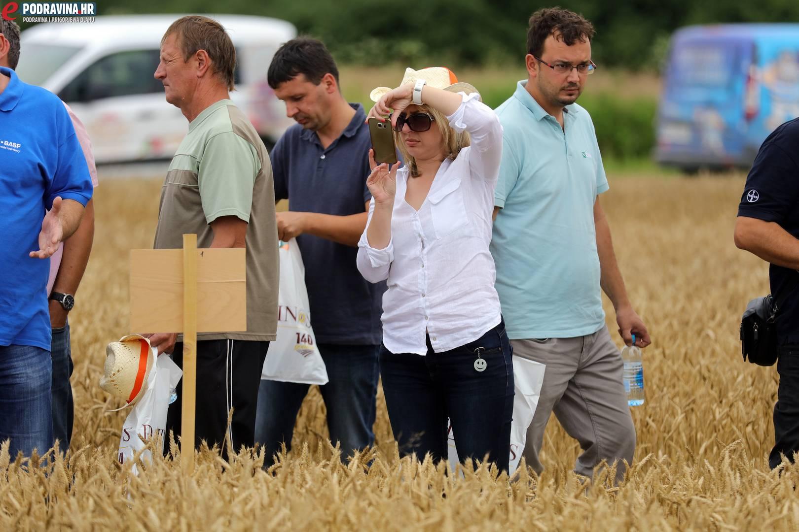Dani polja pšenice
