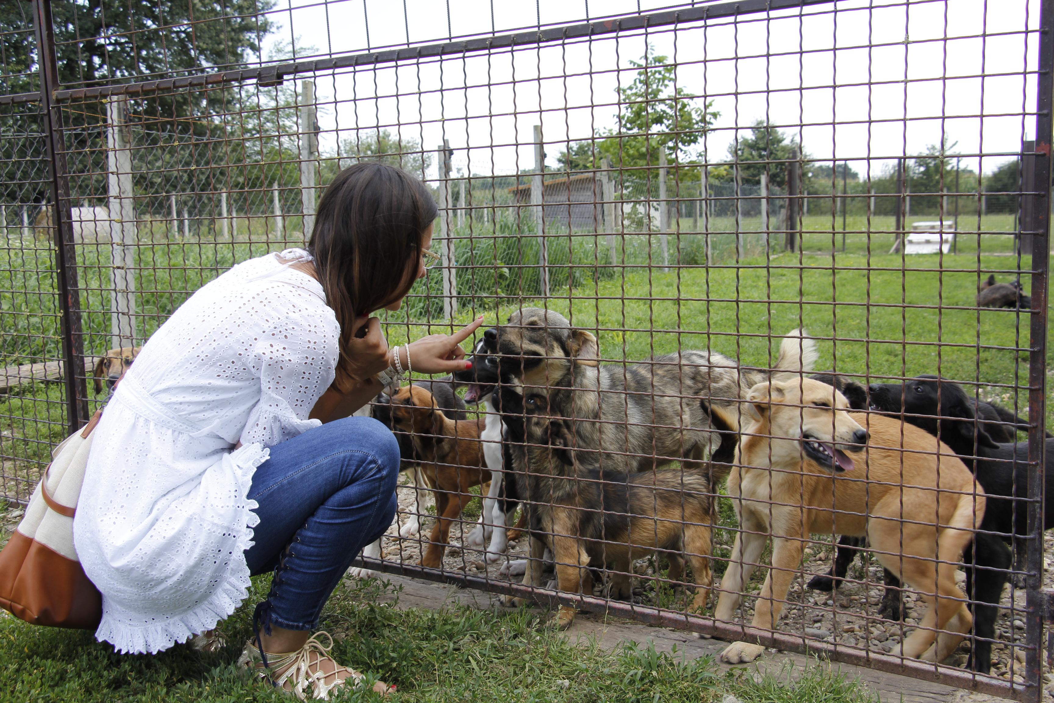 besplatna web mjesta za ljubitelje životinja datiranje s čvrstim središtem strijelaca