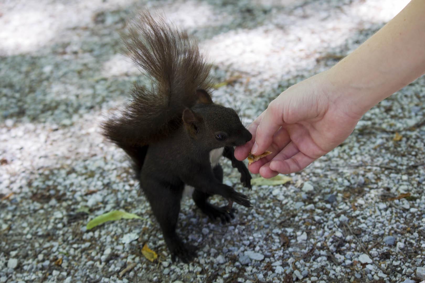 Žene s vjevericama