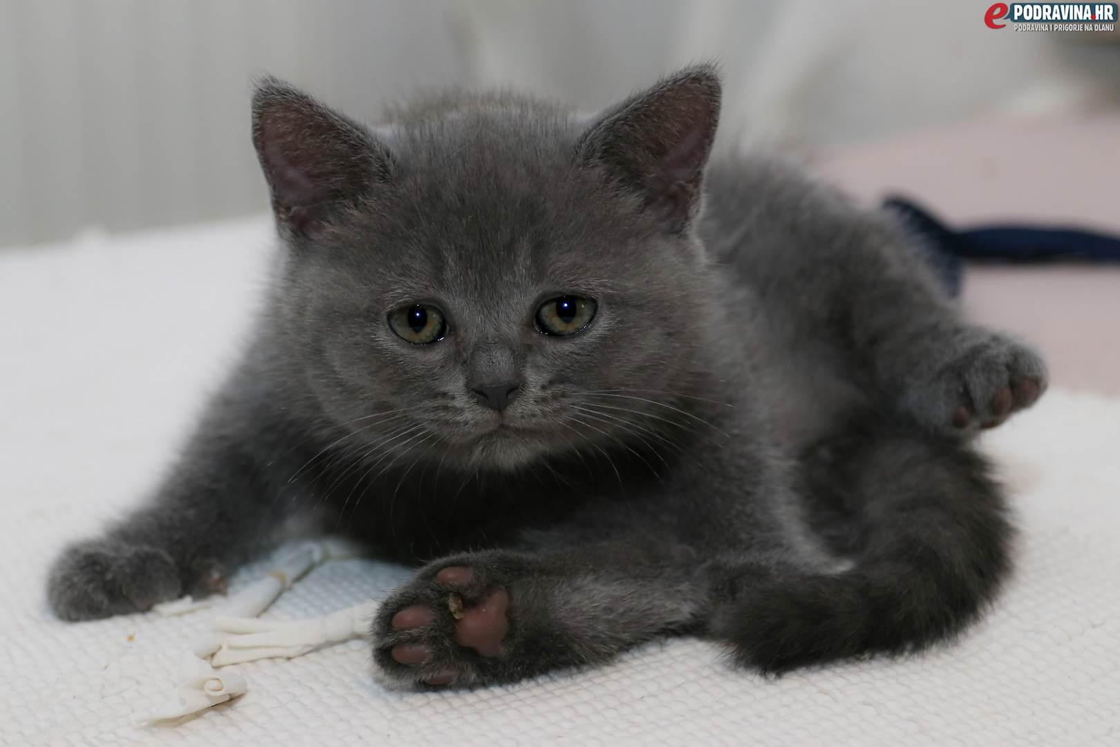 crna maca i bijela maca