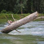 Rafting Hrvatskom Amazonom, Drava // Foto: Matija Gudlin